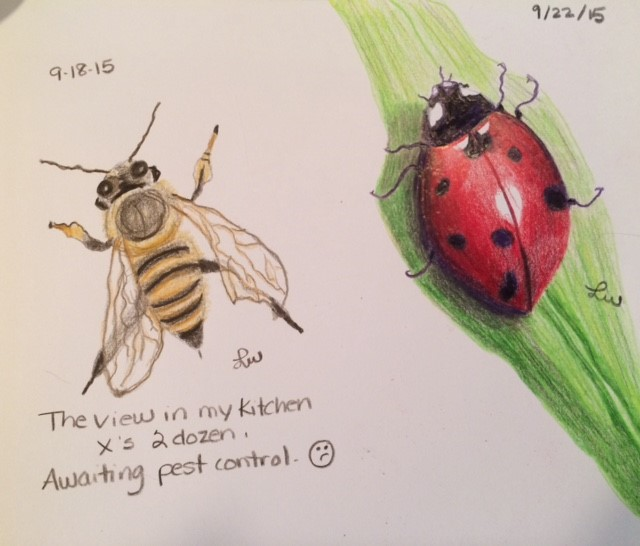 Bee and Ladybug Drawing